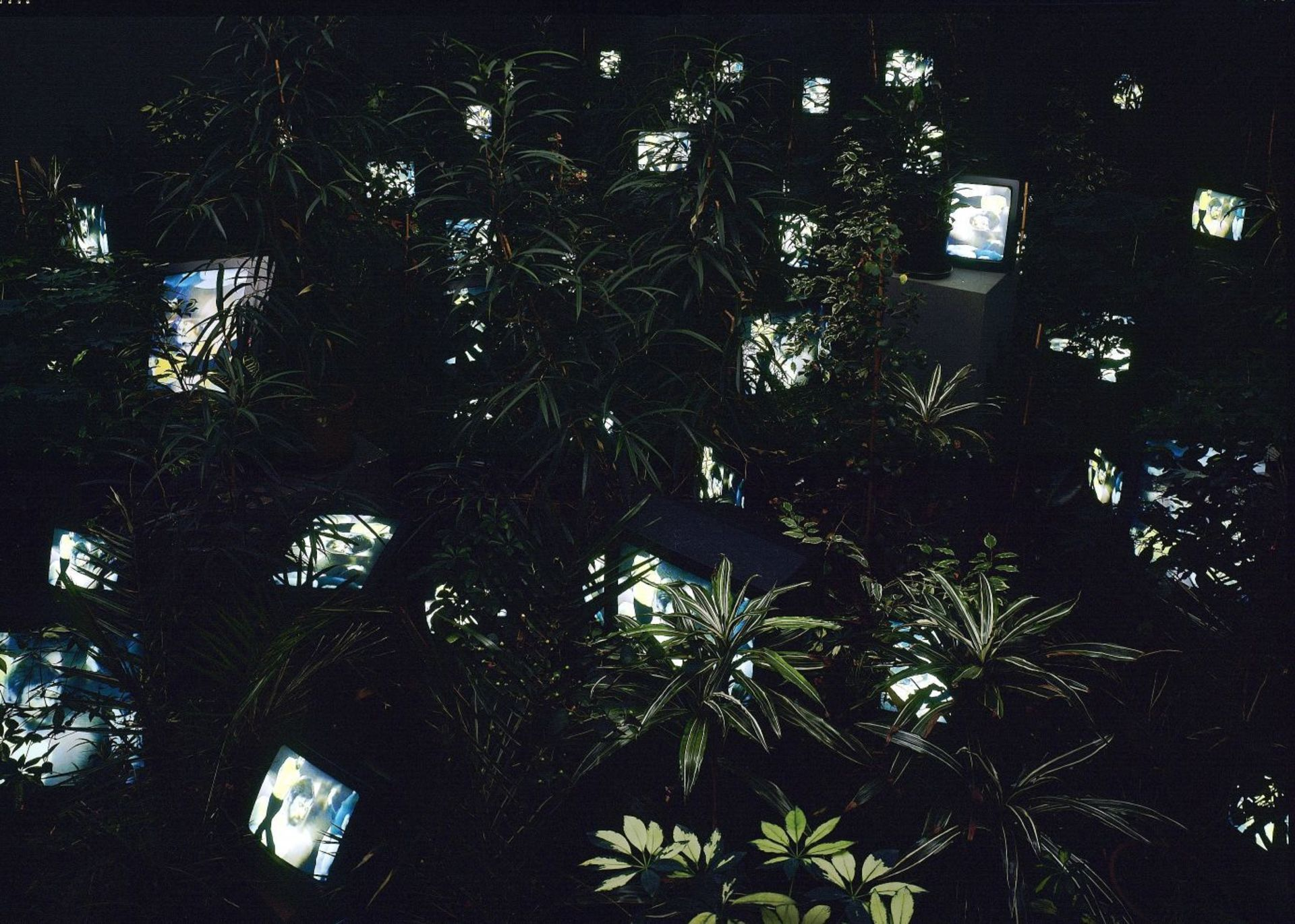 TV Garden2.jpg